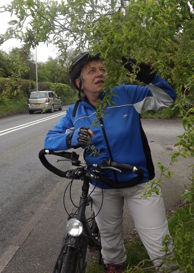 Cutting trailing branches and brambles back from cycle pathways in spring: a Good and Prudent Idea!